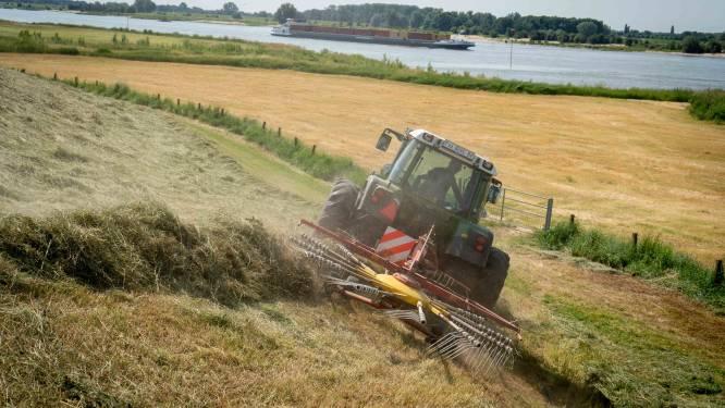 Ecologisch gras maaien op Betuwse dijken