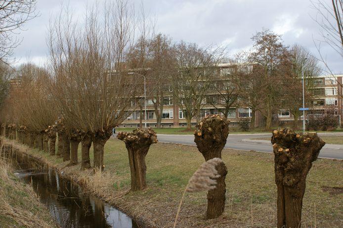 Een mooi voorbeeld van gefaseerd knotten, tien jaar geleden in Wageningen