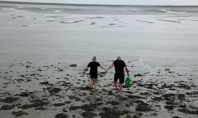 Zeekraal snijden in het land van Saefinghe