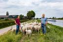 Harry Harmsen (l) en vader Henk met hun schapen op de dijk langs de IJssel. Op de achtergrond hun woonhuis.