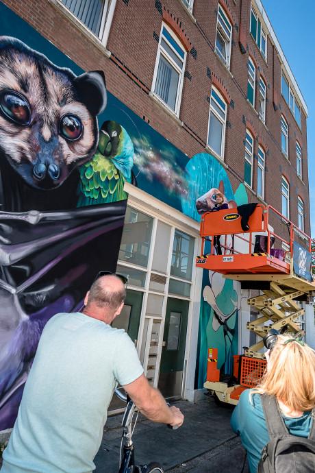 Veel toeloop in Afrikaanderwijk voor streetartfestival Pow! Wow! Vandaag de grote finale