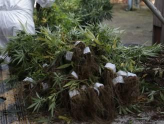 Viertal krijgt drie jaar cel voor grote cannabisplantage in buurt van jachthaven