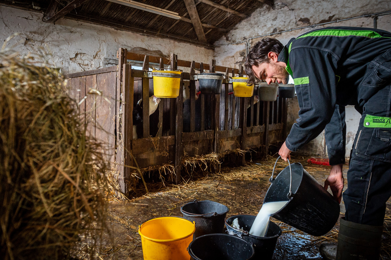 Patrick Roest is helemaal in zijn element tijdens het voeren van de kalveren op de boerderij in Lekkerkerk.