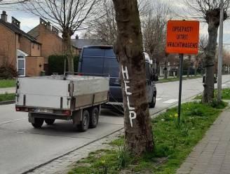 """Buurtbewoners vragen hulp voor bedreigde platanen in Matenstraat: """"Dit wordt de gevaarlijkste straat van Rupelstreek"""""""