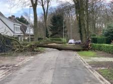 Schade geleden door storm in maart? Dan maakt u kans op een vergoeding