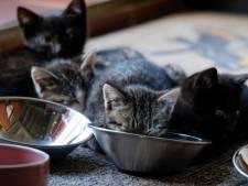 Une trentaine de cadavres de chats retrouvés dans le congélateur d'une maison insalubre en France