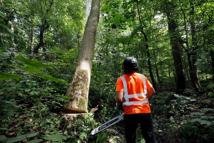 In alle dorpen in de gemeente Gemert-Bakel gaan de komende weken in totaal 190 bomen voor de bijl.