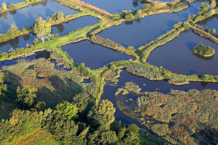 De Weijers, ook wel het land van de 1001 vijvers genoemd. Beeld  Naturalight - Wouter Pattyn