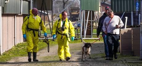 Uitbraak vogelgriep pluimveebedrijf in Sint-Oedenrode, twee omliggende bedrijven ook geruimd