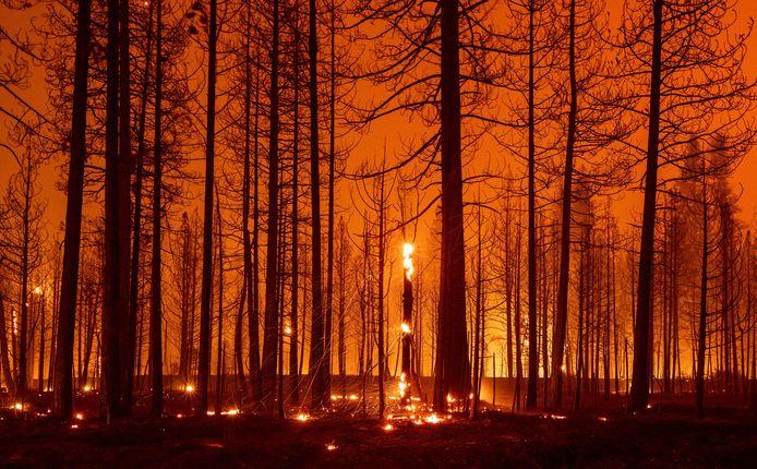 Bomen smeulen tijdens de 'Dixie-brand' in de buurt van Greenville, Californië op 3 augustus 2021. Meer dan 250.000 hectare is verbrand. Het vuur breidt zich uit richting bewoonde gebieden.