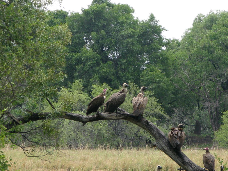Witruggieren in Zambia in betere tijden.