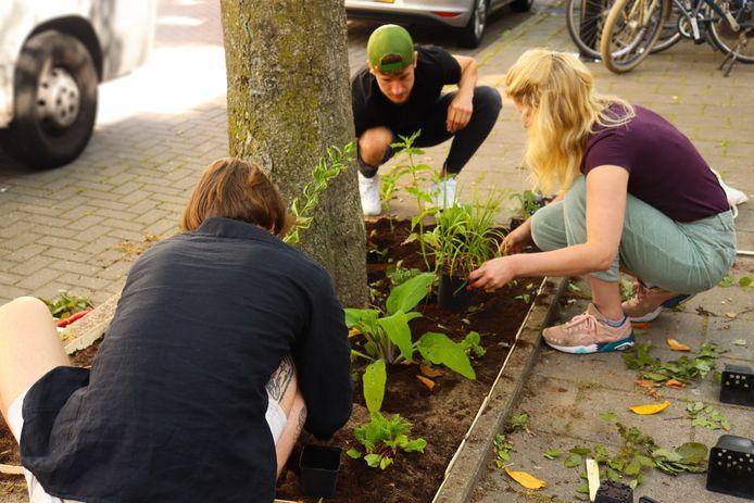 Bewoners richten gezamenlijk een boomspiegel in met plantjes.
