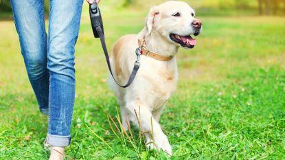 Honden verlengen levensduur van hun baasje én bieden onvoorwaardelijke levenslust