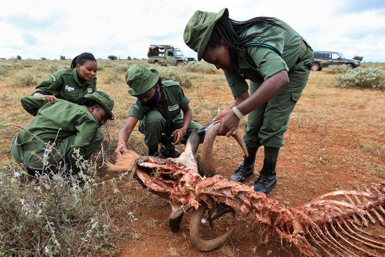 Rangers van de Masai, een Keniaans volk. Beeld EPA