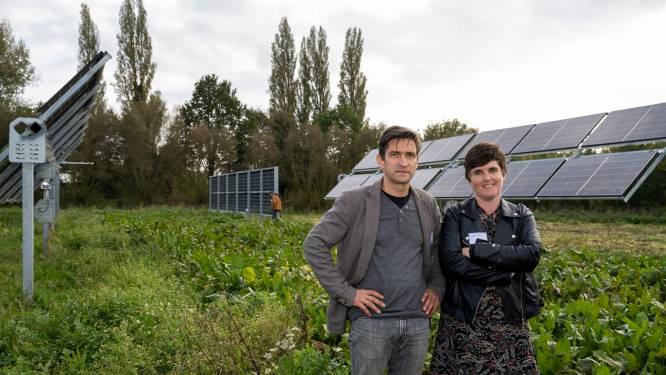 Zonnepanelen tussen de bieten: Herman laat schapenhouderij draaien op eigen groene energie
