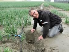 Akkerbouwer José Waverijn gaat met druppelaars en sensoren de droogte te lijf: 'Ik zie toekomst in ondergrondse irrigatie'