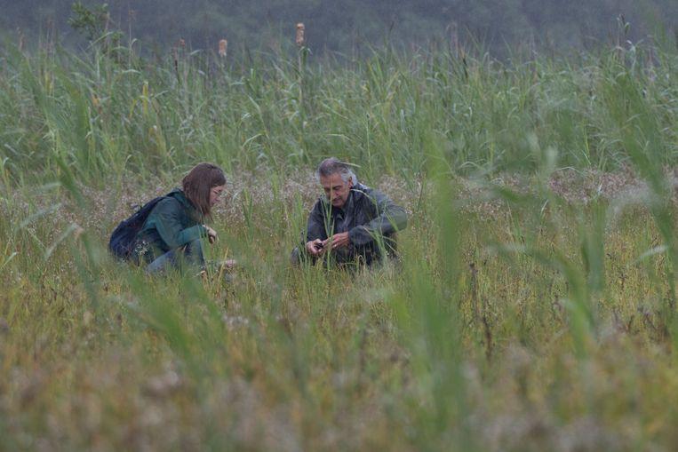 Annegreet Veeken herhaalde dertig jaar oud onderzoek van haar hoogleraar Martin Wassen naar de planten in het oosten van het Naardermeer. Beeld Luc Hoogenstein