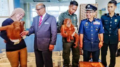 Honderden wilde dieren uit handen van smokkelaars gered voor kust van Maleisië