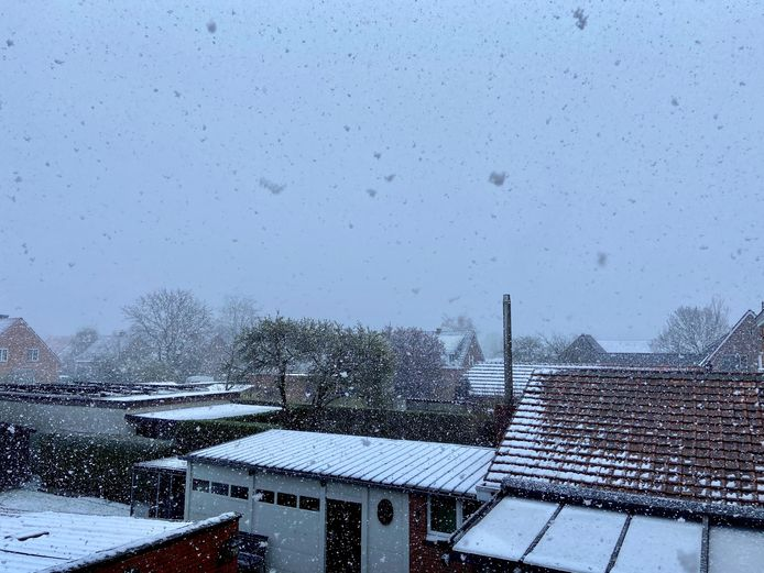 Sneeuw in Zoersel dinsdagvoormiddag
