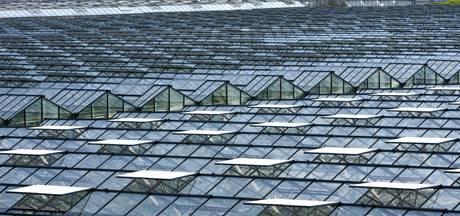 Glastuinbouw in Boekel kan nog groeien