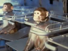 Volkswagen stopt met testen op apen en andere dieren