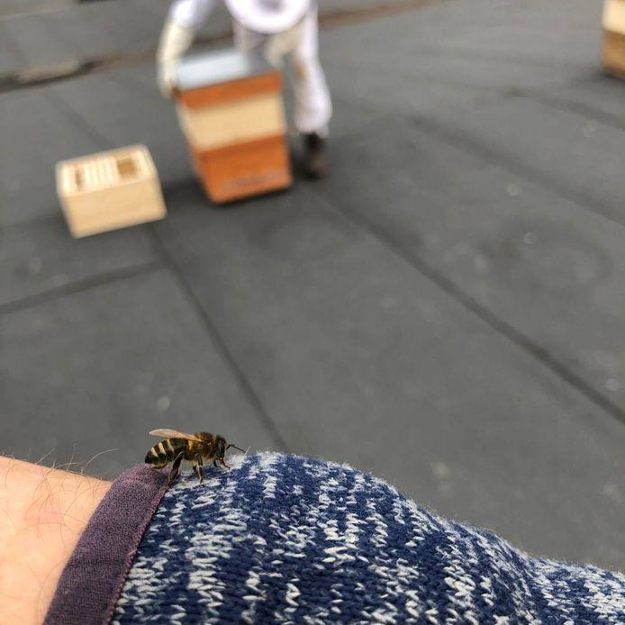 Imker Dieter Deleu plaatste twee bijenkasten op het dak van Revor Group .