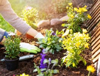 Bereken je tuinscore en krijg tips met online platform Mijn Tuinlab