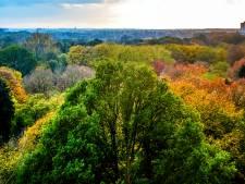 Binnenstad Tilburg is voortaan 'klimaatzone' na aanscherping bomenbeleid