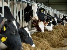 Controles op veehouderijen in Brabant aangescherpt