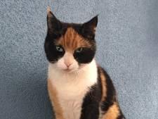 Ritthem vreest dat kattenhater weer actief is