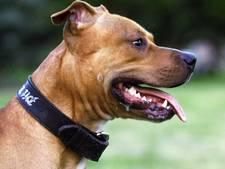 Twee honden in beslag genomen in onderzoek illegale gevechten