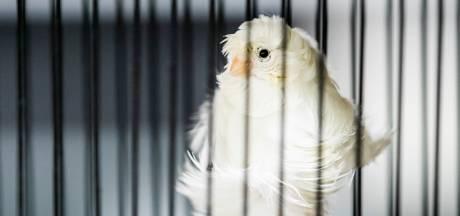 Nieuwe dierenwet legt bom onder veehouderij en houden huisdieren