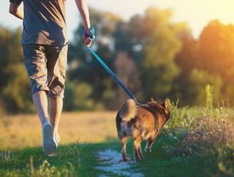 Vanaf 8 juli kan je in Gooik deelnemen aan 'De gezondste wandeling' van Logo Zenneland