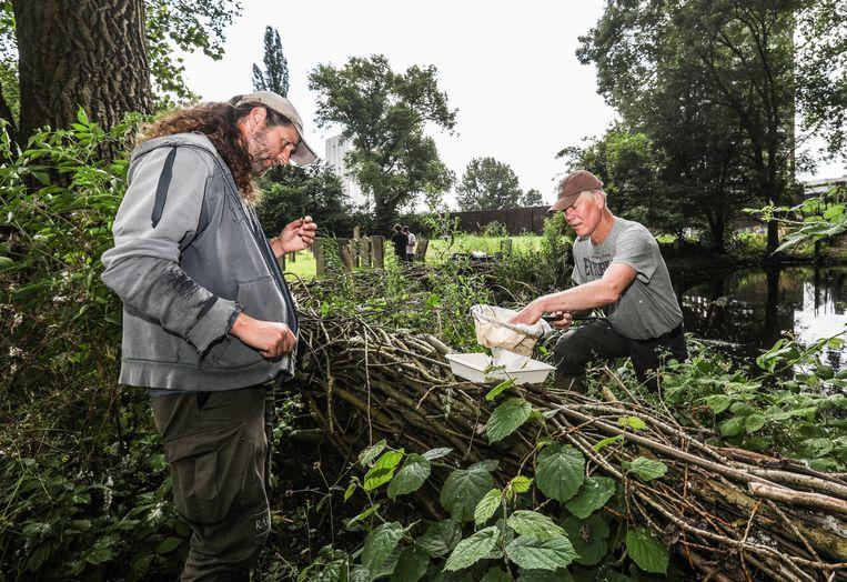 Stadsecoloog Geert Timmermans (r) en veldbioloog Edo Govers onderzoeken slakken bij de Joodse Begrafenis Zeeburg bij Flevopark.  Beeld Eva Plevier