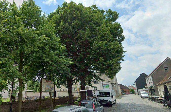De linden typeren het straatbeeld op het dorpsplein van Zegelsem, maar verkeren in slechte staat.