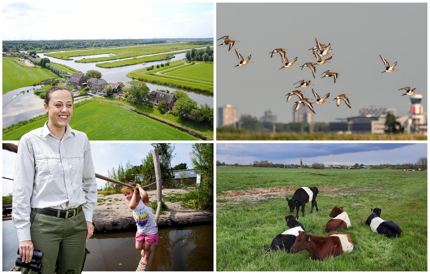 """Het Midden-Delflandgebied (met de klok mee): de Vlietlanden, grutto's tegen de Rotterdamse skyline, lakenvelders in de polder en belevenisboerderij Schieveen. Op de voorgrond Lisa Wassenaar: ,,Zo zie je hoe dicht mens en natuur bij elkaar staan."""""""