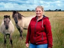 'In de Noordwaard leren deze konikpaarden weer wild te zijn'