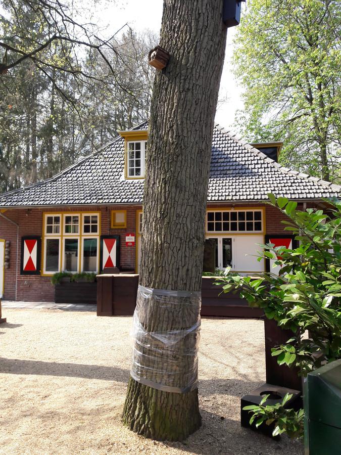 Ook bij boshuis Venkraai in Oisterwijk werden eiken met plastic folie omwikkeld in de hoop dat de eikenprocessierups dan niet omhoog of omlaag gaat kruipen
