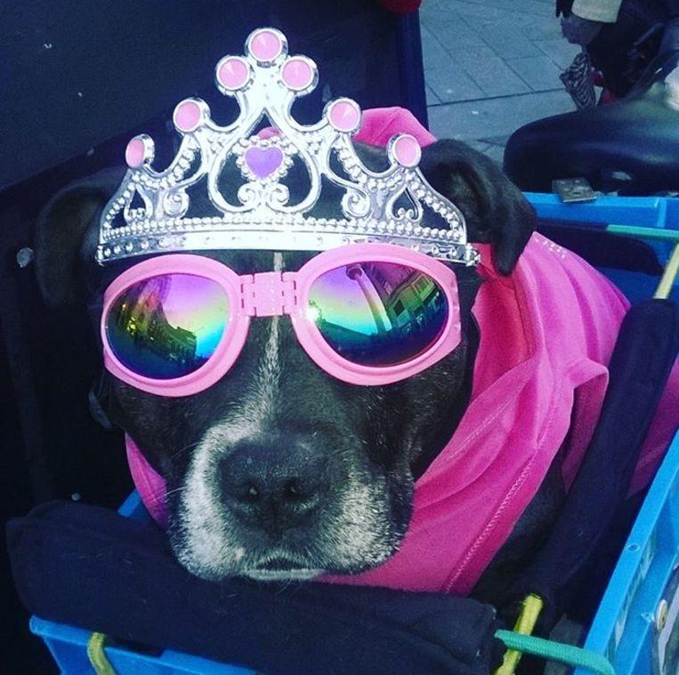 De hond heeft maar liefst 175 zonnebrillen