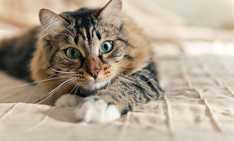 Uitvinding: een halsband die jouw kat een echte stem geeft!