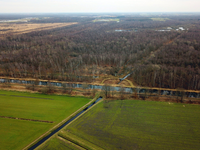 Het bos in het zuidelijk deel van Leegveld in Deurne.