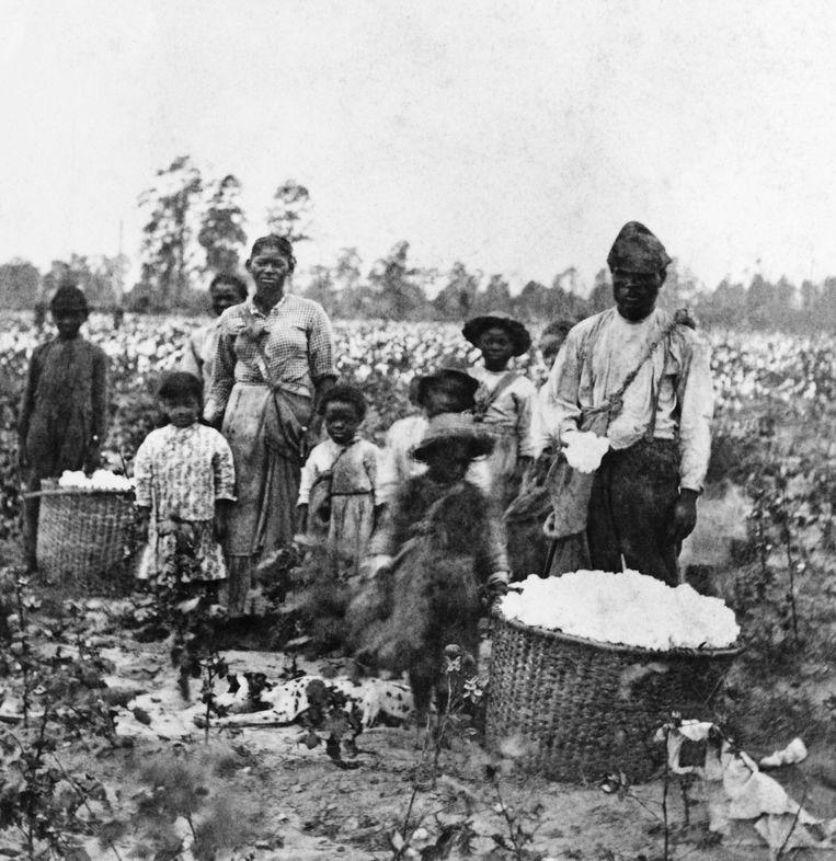 Een slavenfamilie op een katoenveld bij Savannah in de zuidelijke Amerikaanse staat Georgia. Beeld Bettmann Archive