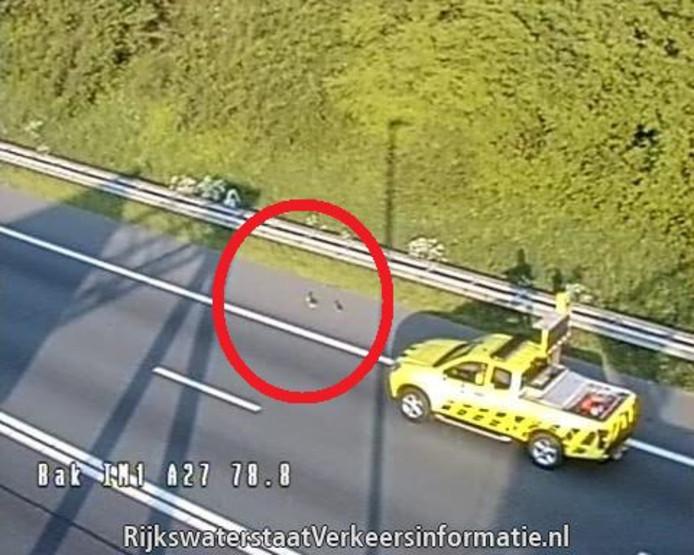 Eendjes op de weg bij knooppunt Rijnsweerd.