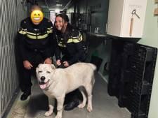 Verwaarloosde hond die op dak leefde in beslag genomen