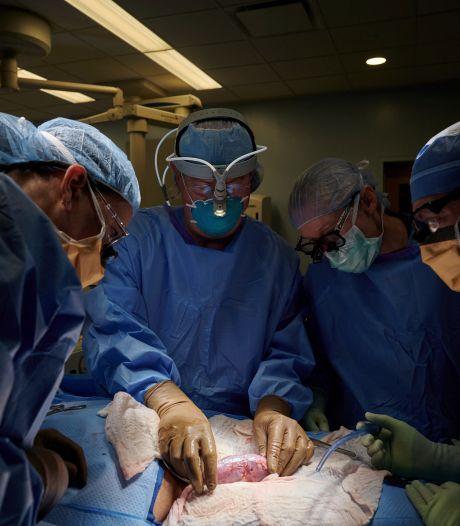 Un rein de porc transplanté pour la première fois sur l'homme