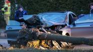 VIDEO. Vier jongeren zwaargewond na crash met hoge snelheid tegen boom in Brugge