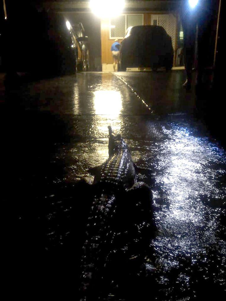 Door de overstromingen scharrelen krokodillen rond in Townsville.  Beeld AFP
