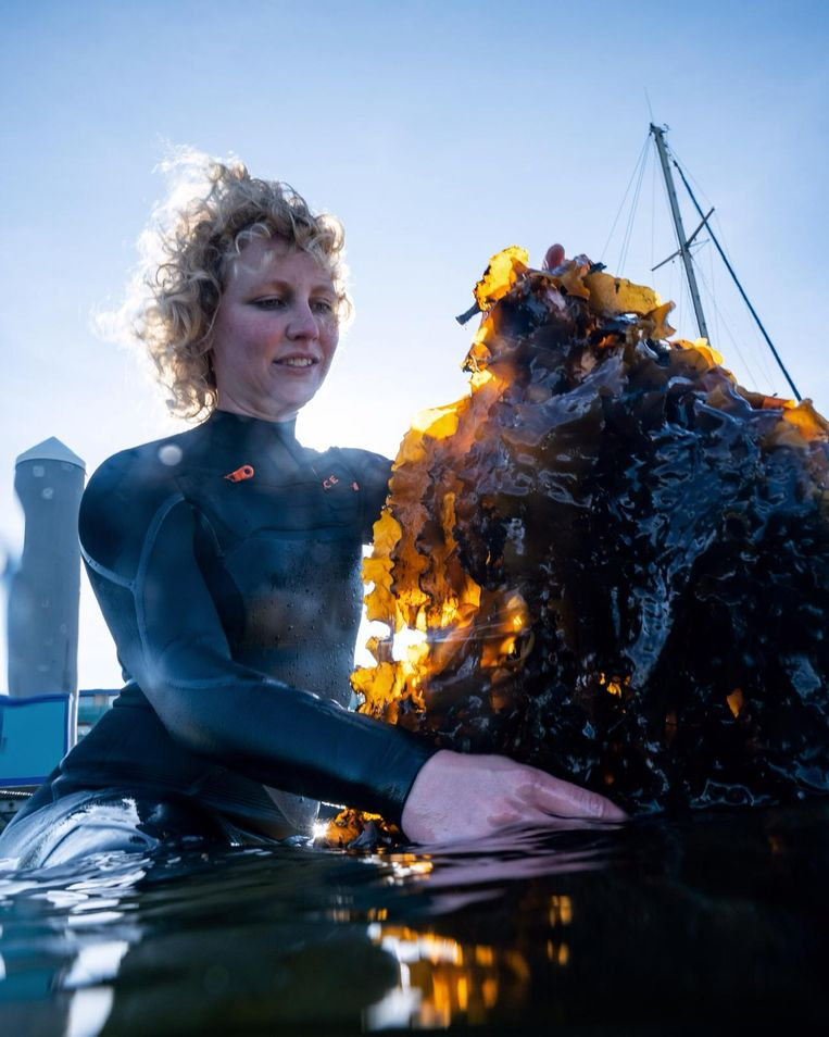 Nikki Spil oogst het zeewier. Beeld Tomas Grootveld
