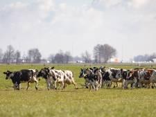 Gelderland spreekt achter gesloten deuren over opkopen boeren voor stikstof