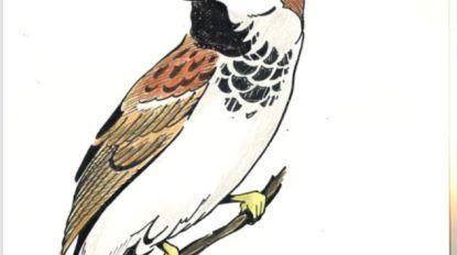 Vogelvrienden organiseren 35ste vogelshow